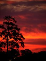 Sunrise Tree by Sharondipity