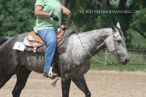 Quarter Horse Stock 108 by tragedyseen