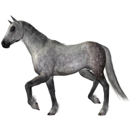 STOCK PNG horse dapple grey2 by MaureenOlder