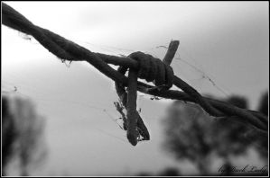 Barbed wire by Alissia666