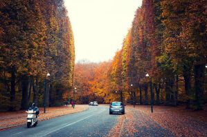 Autumn in the City by Freggoboy