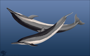 Spinner Dolphin by Nioell