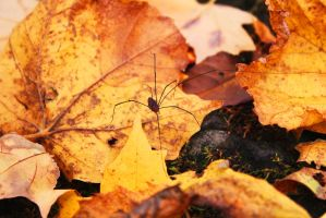 Mr. Longlegs by RuckusRufus