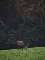 Photography league: Animal Kingdom (projected) by m3j