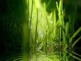 Android Grass by freakshow11582