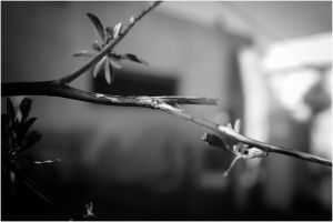 branches by demor