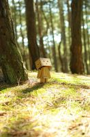 Woodland Wander Full Res by RyanMichael