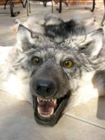GreyWolf Sold3 by lamelobo