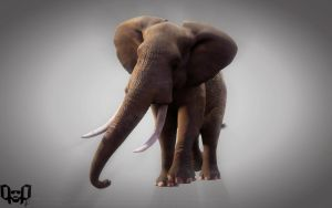 The African Elephant by Nieuwus
