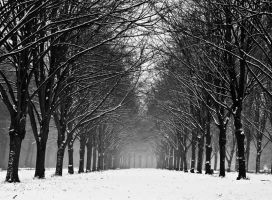 Sweet Winter Cold Winter by Onephotoaday