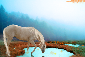 F A L L . B A N N E R . Entry. by MiddysGraphics