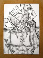 Wolverine 5x7 drawing by DoomCMYK
