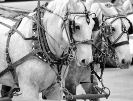 Horse Drawn by yeliriley