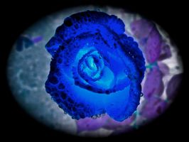 Water Drops on a Blue Rose by IcejCat