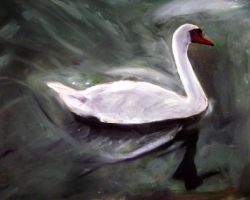 White Swan by masaad