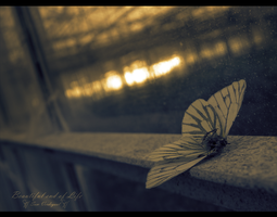 Beautiful end of Life by SamVerdegaal