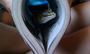 Lizard in a Book by CelestialTentails