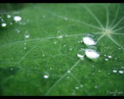 Raindrops by love1008