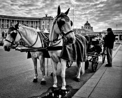 in front of hofburg palace by tolgagonulluleroglu