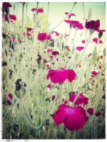 Small Flowers by Ranae490