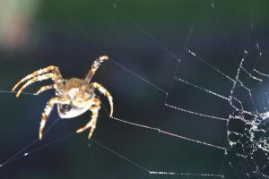 Spider2 by Atlantic-crab-meaT