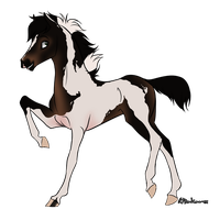 Auction: Seal Bay Paint Colt [Ended!] by buckuroo