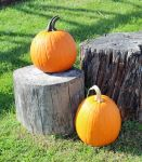 Two Pumpkins Two Stumps by shadowsheartbeat