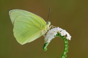 Lemon Emigrant 190909 by inckurei