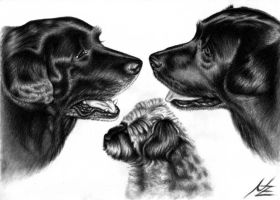 Black Labradors by ArtsandDogs