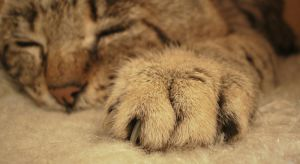 big paw by she-is-so-fly