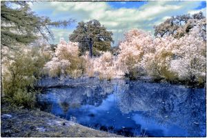Small Pond in Infrared by helios-spada