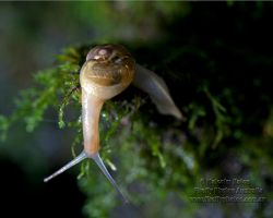 The Inquisitive Snail by FireflyPhotosAust
