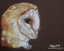 Barn Owl by 5Happy5
