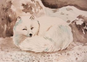 sleepy arctic fox by SuzetteLarks