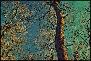 The Trees and the Sky 2 by amcg87