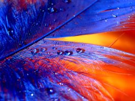 Blue and Orange by CharliePie