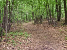 Path Through Woods 2 by Retoucher07030