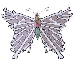 Anatomy of a butterfly by Fenster