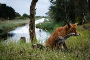 Foxes 9 by DarkDeltaPhoto