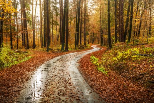 Wet autumn road by Poli91