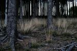 black forest.  by Eileen1804