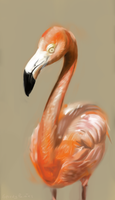 Flamingo by buzzelliArt