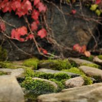 moss and stones by Wilithin
