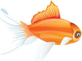 Goldfish - Illustrator by des-igner