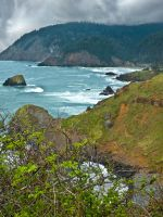 Lush Outcropping by LAPoetry-n-Photo