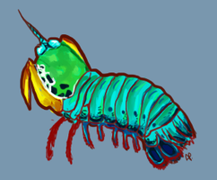 Mantis shrimp by Alisha-town