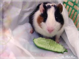 ..Its MY cucumber.. by pink-heart