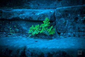 Magical Plants by FilipR8