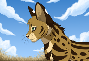 Field grass by KaiserTiger