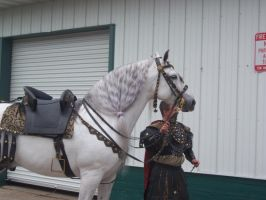 Gray Andalusian Stallion 003 by diamonte-stock